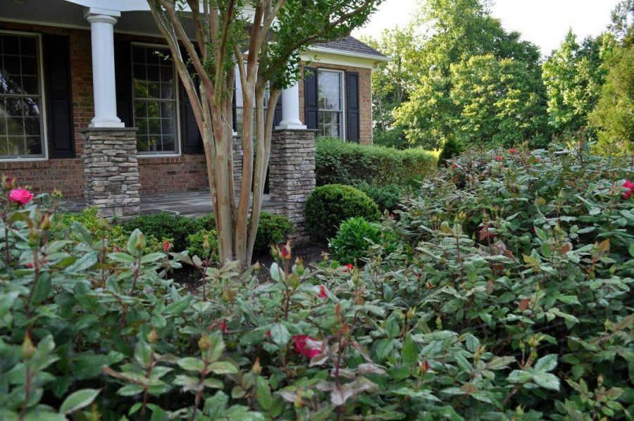 Tree trimming and pruning gives your home a clean look and healthier trees.
