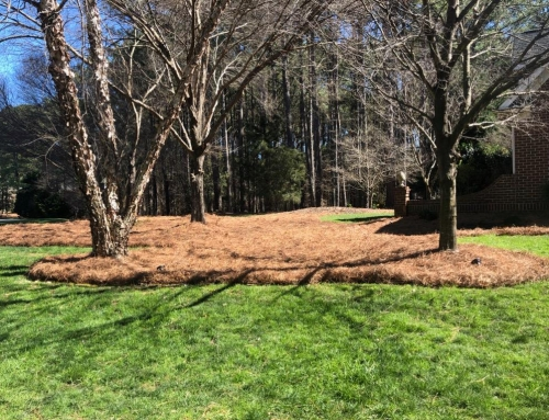 Protect Your Triangle Landscape with Mulch & Pine Straw