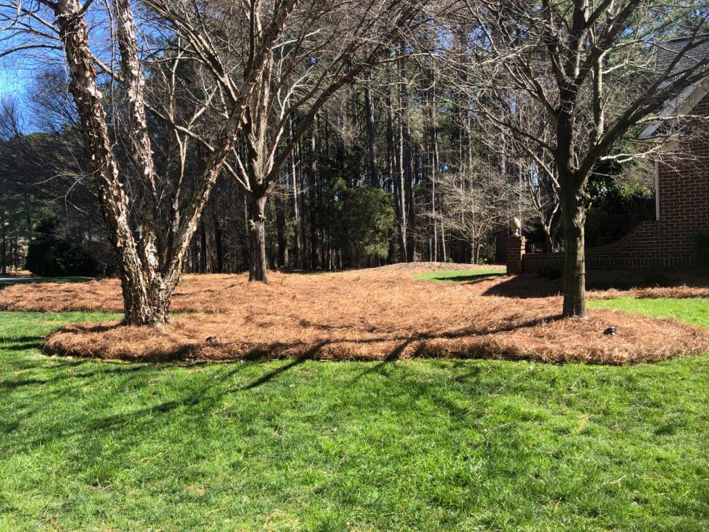 Protect Your Triangle Landscape With Mulch Amp Pine Straw