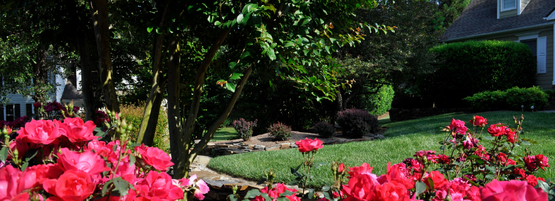 Planting trees, plants, shrubs and hedges makes your yard beautiful and more welcoming.